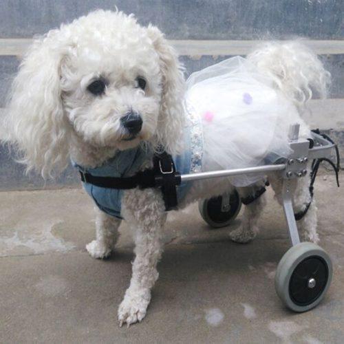 Silla De Ruedas Para Perros [Ajustable] photo review
