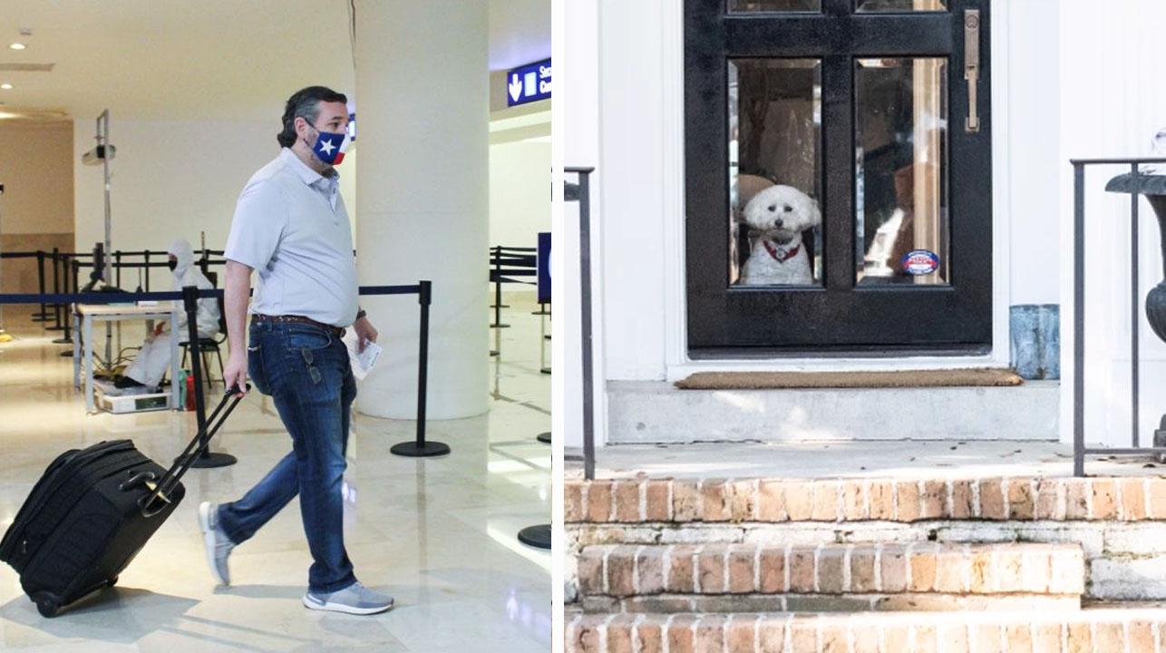 """Senador se va de vacaciones a Cancún y deja a su perro en la casa """"congelada"""""""