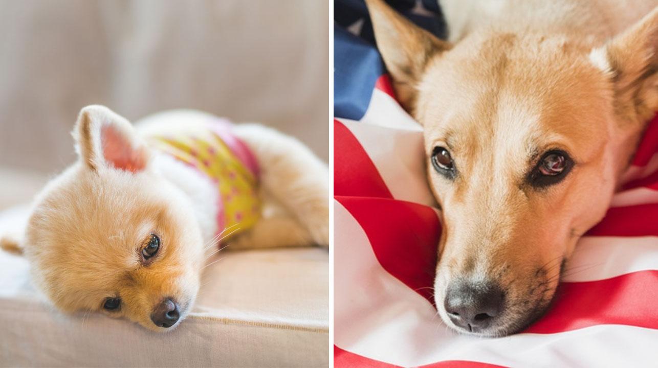 Estados Unidos prohíbe la entrada de perros provenientes de 100 paises