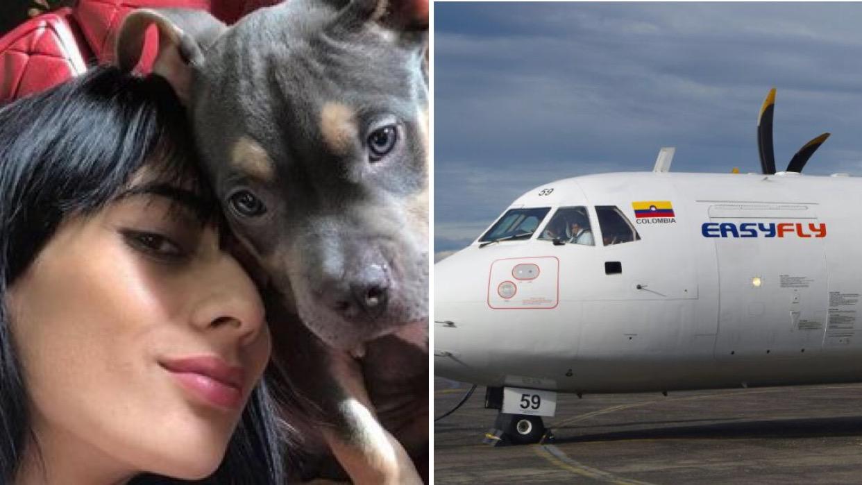 Aerolínea deberá pagar multa millonaria por el deceso del perro Homero