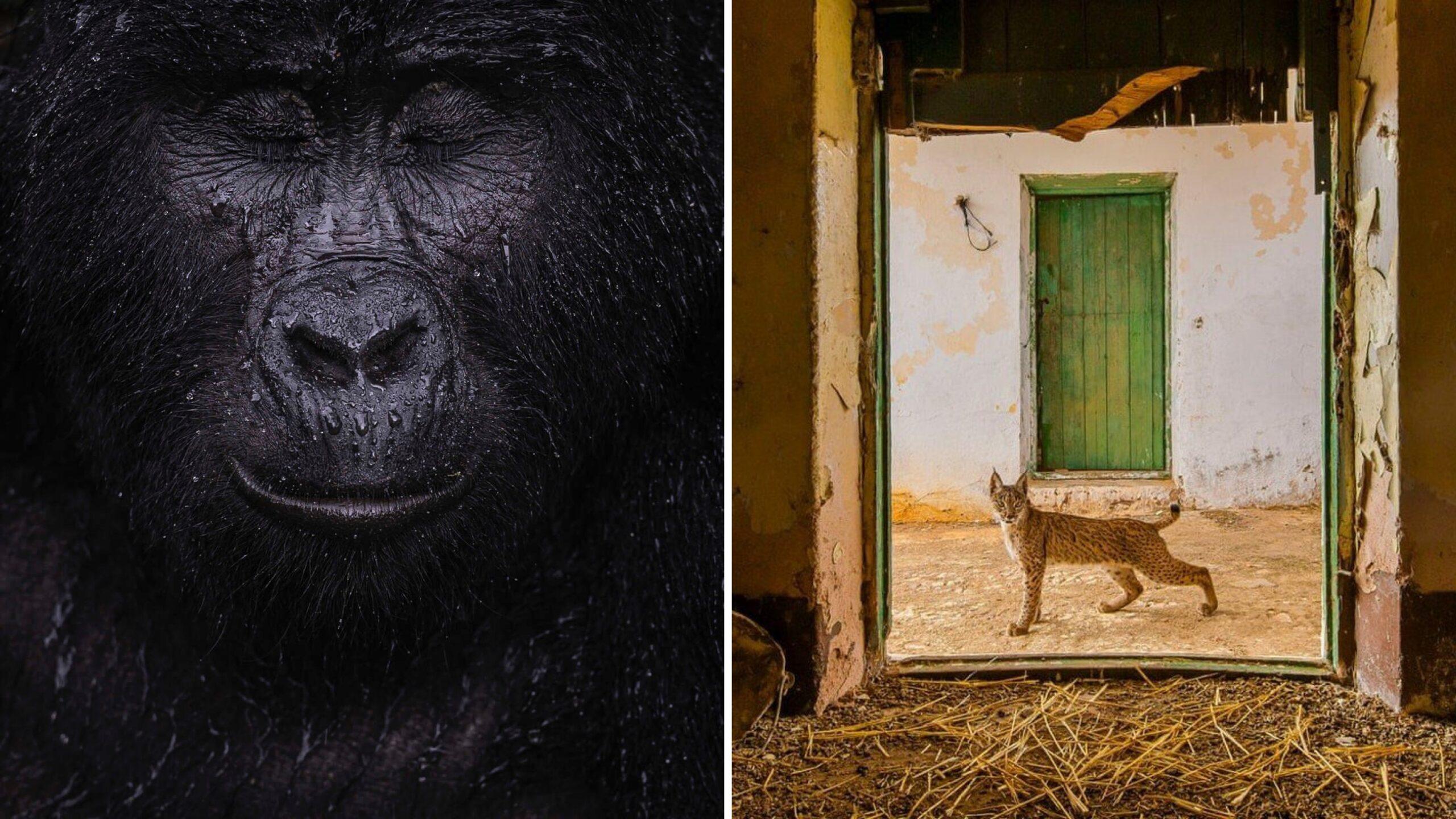 Ganadores del premio al fotógrafo de vida silvestre del año 2021