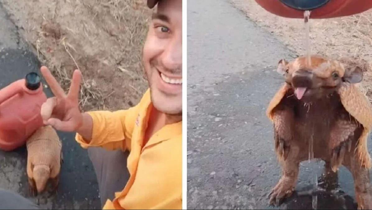 Motociclista se detiene en la carretera, se hace amigo de un armadillo sediento y calma su sed