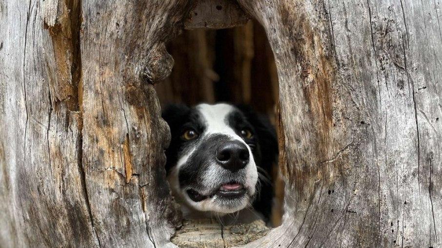 Perrito encuentra refugio en un árbol y se ríe, olvidando su triste pasado