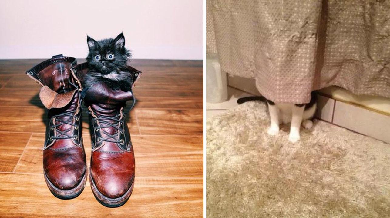 16 gatos que son demasiado buenos para esconderse