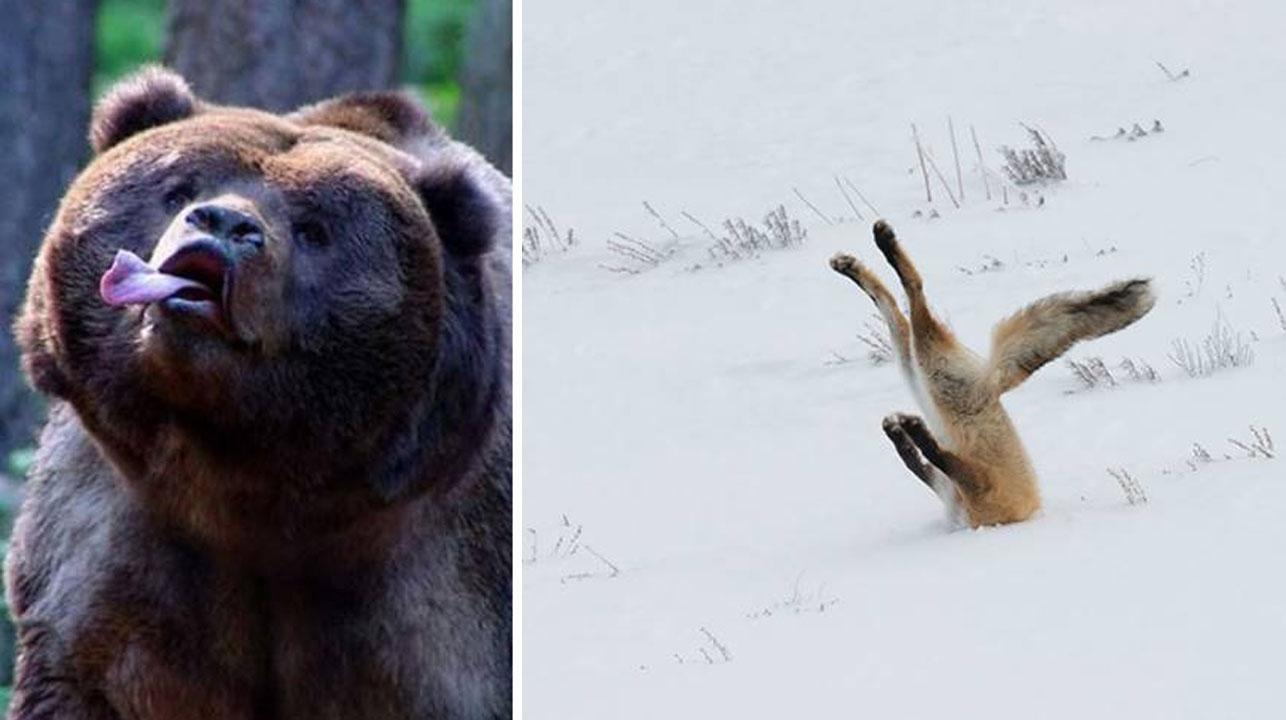 Fotos de animales salvajes, tomadas como nunca antes las habías visto
