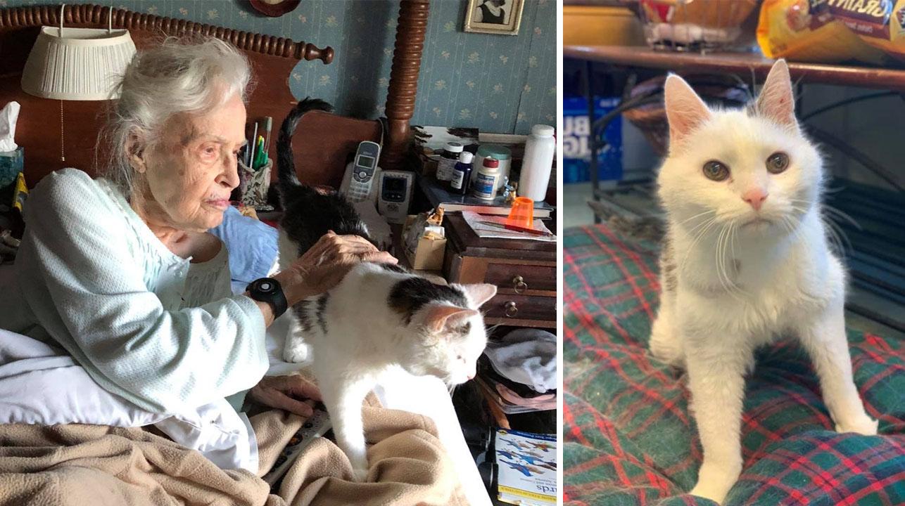 Mujer de 101 años adopta al gato más viejo en un refugio