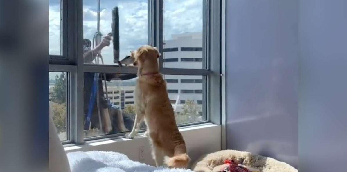 Perrita no entiende por qué el chico que está afuera de la ventana no juega con ella